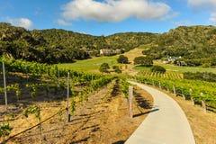 Walking path through a vinyard in mountains Stock Images