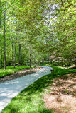 Walking Path Winding Through Forest Stock Photography