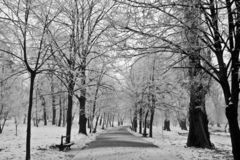 Walking Path in Winter Park. A paved path in a tree-filled park covered in a light snowfall Royalty Free Stock Image