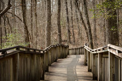 Walking path on wood boardwalk thru woods Royalty Free Stock Photo