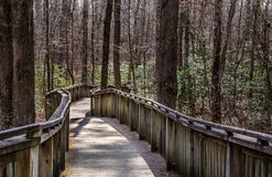 Walking path on wood boardwalk thru woods Stock Image