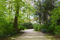Walking path in the wooded park Stock Photos
