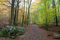 Walking Path woods autumn, Ardens, Wallonia, Belgium Stock Photos