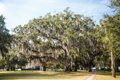 Walking Paths Among Oak Trees with Spanish Moss Stock Image