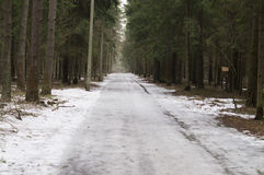 Walking paths in the pine forest Royalty Free Stock Photo