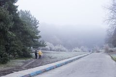 Walking people with sticks on misty morning. Early landscape on a walk. Part of life stock photos