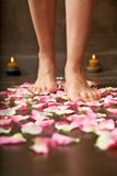 Walking on pink petals Stock Images