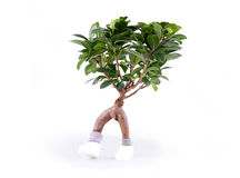 Walking plant. Funny plant with two legs Royalty Free Stock Photos