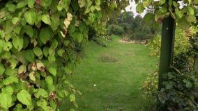 Walking POV imitation between creeper plants arch in garden stock video footage