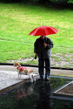 Walking in the rain Stock Images