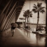 Walking in the rain. Wet, umbrella, palm's Stock Images