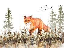 Walking Red Fox Sketch Stock Photo