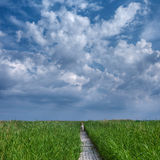 Walking through reed Royalty Free Stock Photography