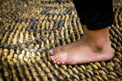 Walking on reflexology path Royalty Free Stock Photo