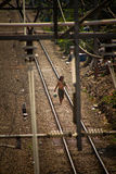 Walking resident man of the train track slums of central Jakarta Stock Photography