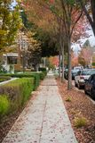 Walking through a residential neighborhood on a cloudy autumn day; colorful fallen leaves on the ground; Palo Alto, San Francisco. Bay area, California royalty free stock photography