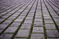 Walking road made of cement paving stones. Walking lane in the park made of cement paving stones stock photo