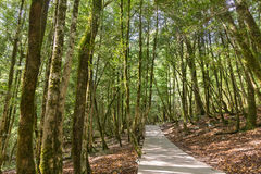 Walking route in boxwood grove Royalty Free Stock Photos