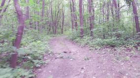 Walking or running exercise along dirt path in forest stock footage