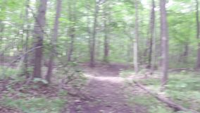 Walking or running exercise along dirt path in forest stock video