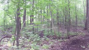 Walking or running exercise along dirt path in forest stock video footage