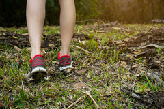 Walking or running legs in forest, adventure and exercising. In summer nature royalty free stock photos