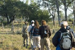 Walking safari. Discovering African wildlife on foot in South Luangwa NP, Zambia Stock Images