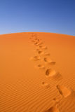 Walking on Sahara Royalty Free Stock Images
