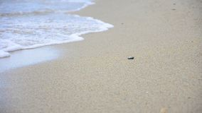 Walking on sand, Royalty Free Stock Photography