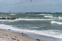 Walking seagull Royalty Free Stock Photos