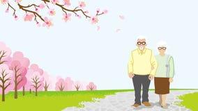 Walking Senior couple , full bloom cherry trees -EPS10 Stock Images