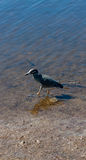 Walking in shallow water Royalty Free Stock Photo
