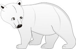 Walking single white color bear Stock Photo