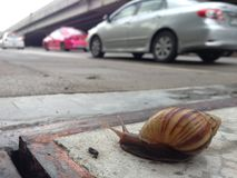 Walking snail on pedestrian walkway with traffic background. A close up shot of snail with traffic background Royalty Free Stock Photography