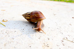 The Walking Snail Stock Images