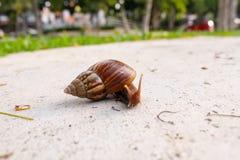 The Walking Snail Stock Photos