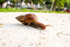 The Walking Snail Stock Photo