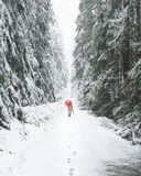 Walking the snow covered trail with a red umbrella stock image