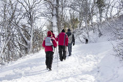 Walking on the snow forest Royalty Free Stock Photography