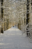 Walking in the snow Royalty Free Stock Images