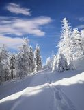 Walking in the snowy forest in sunny day. Royalty Free Stock Photos