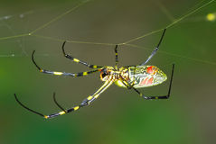 Walking spider Stock Images