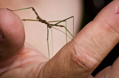Walking Stick Held in a Hand Royalty Free Stock Photo