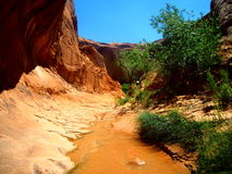 Walking through the stream in Coyote Gulch, Escalante, Utah Stock Photo