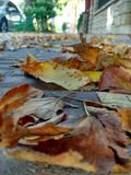 Walkin in autumn stock photography