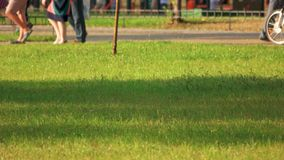 Walking strolling people in the park. Green grass meadow in a crowded city park stock video footage