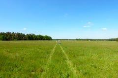 Walking through Summer Fields Royalty Free Stock Photos
