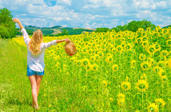 Walking on sunflower field. Happy woman walking on sunflower field in sunny day, raised up hands, beautiful landscape, European nature, farming concept Royalty Free Stock Image