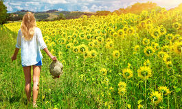 Walking in sunflowers field Royalty Free Stock Image