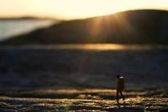 Walking in sunset Royalty Free Stock Photo